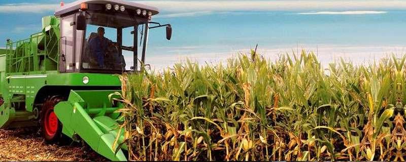 玉米收割机有没有直接脱粒的