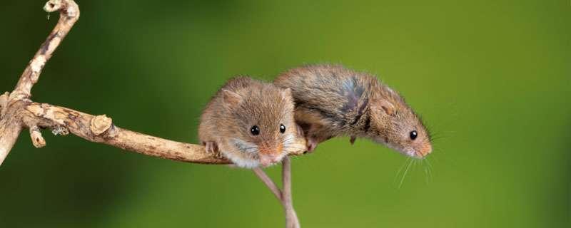 捕鼠器制作方法