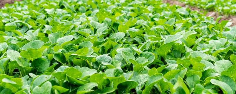复合肥料怎么正确使用
