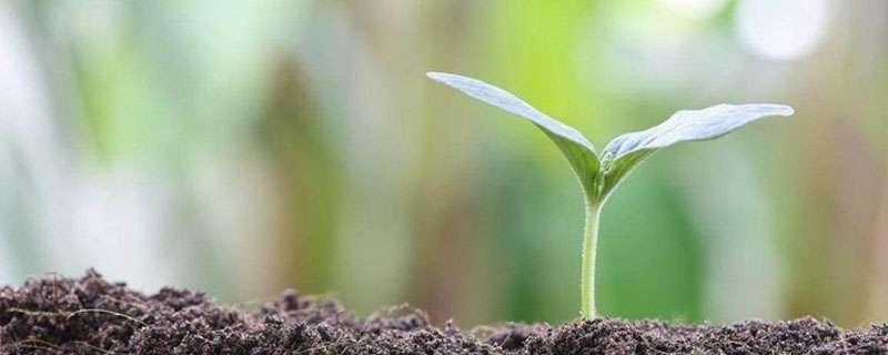什么是有机肥料