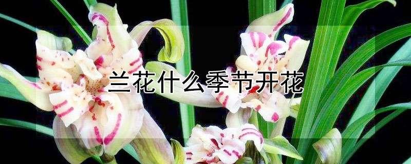 兰花什么季节开花
