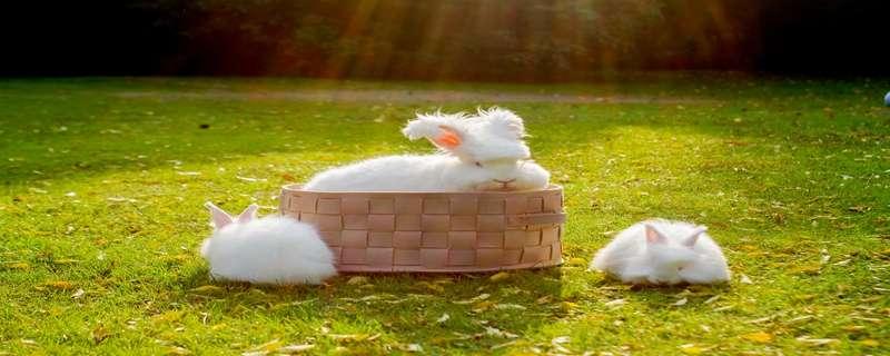 兔子养殖方法和技术